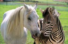 Racing Stripes Stripes Expresadas Por Frankie Muniz Fecha 2005 Fotografia De Stock Alamy