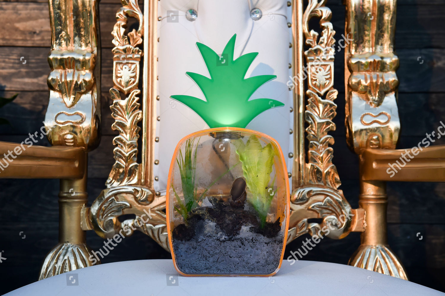 Gary pet snail sits on his shrine Editorial Stock Photo