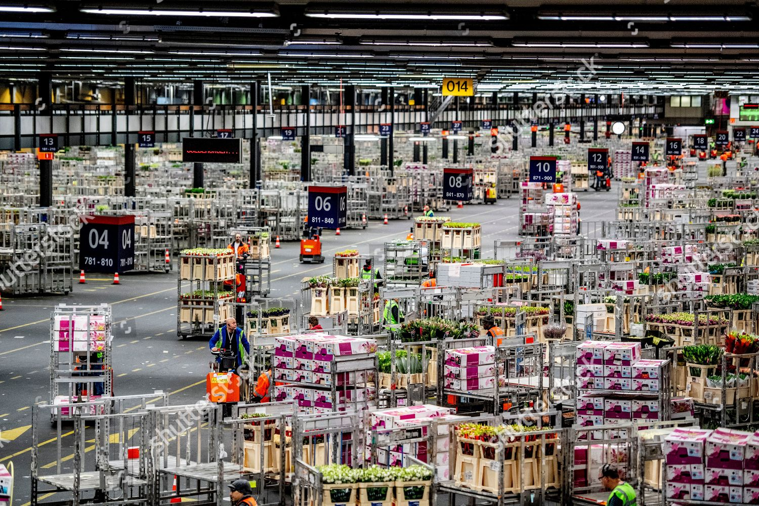 Royal Floraholland flower auction Editorial Stock Photo - Stock Image | Shutterstock