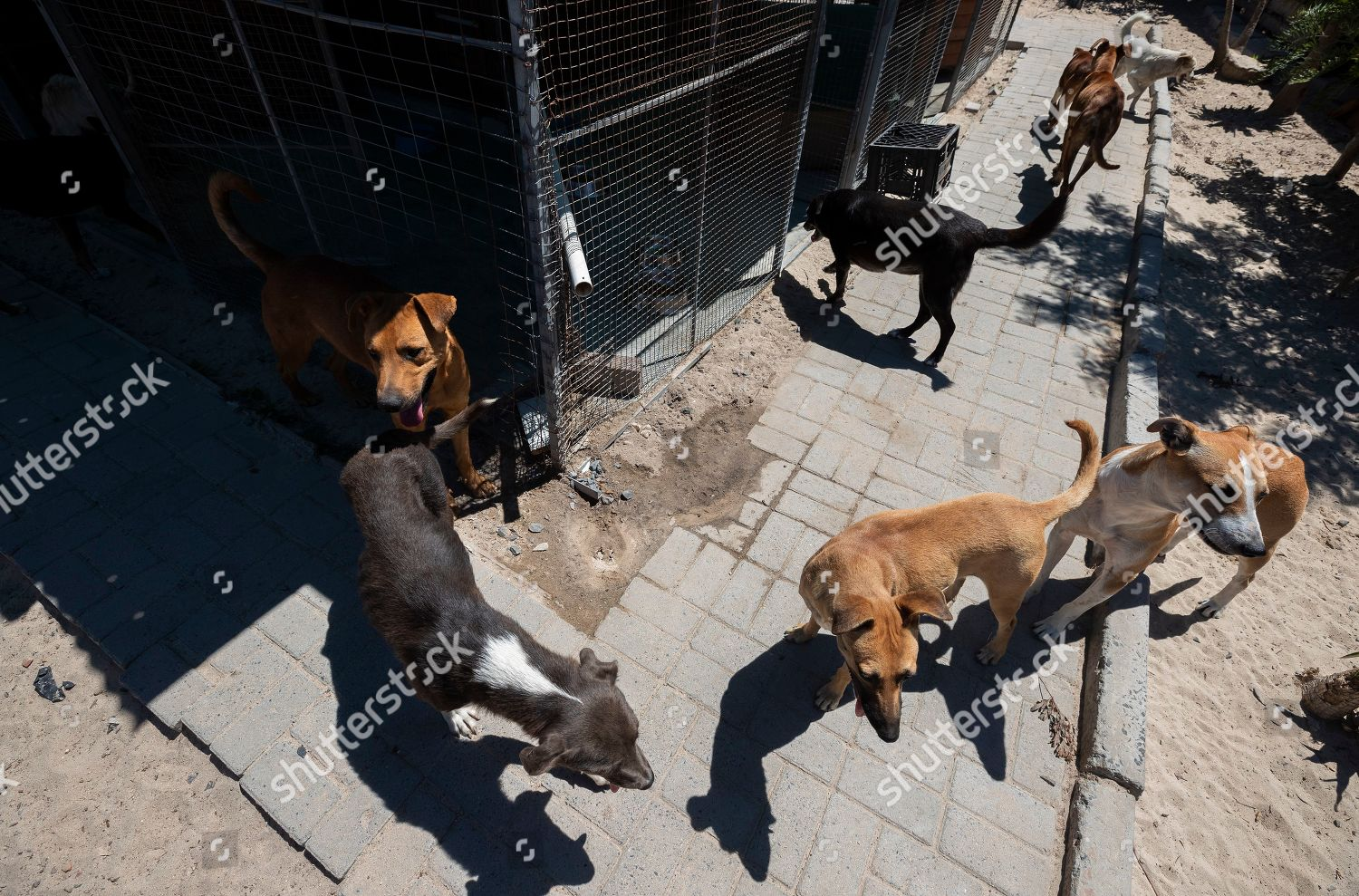 Abandoned stray dogs enclosure Mdzananda Animal Clinic Editorial
