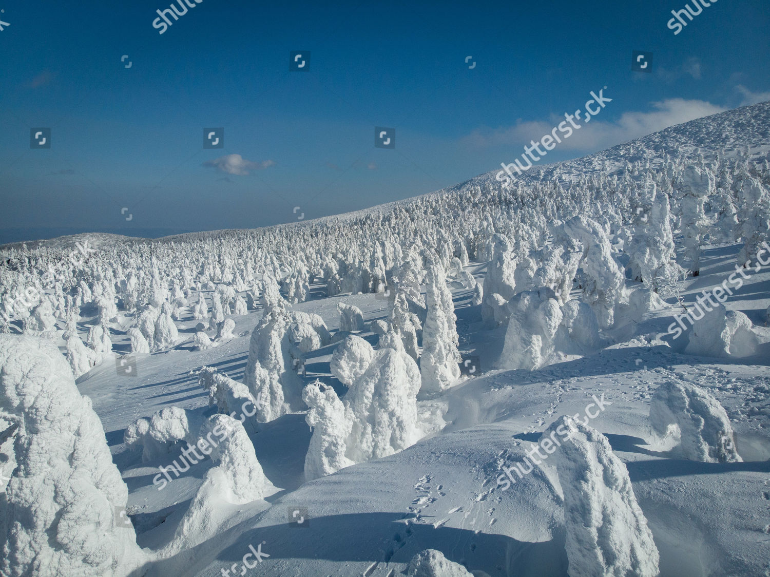 aerial picture shows snow monster trees area Editorial Stock
