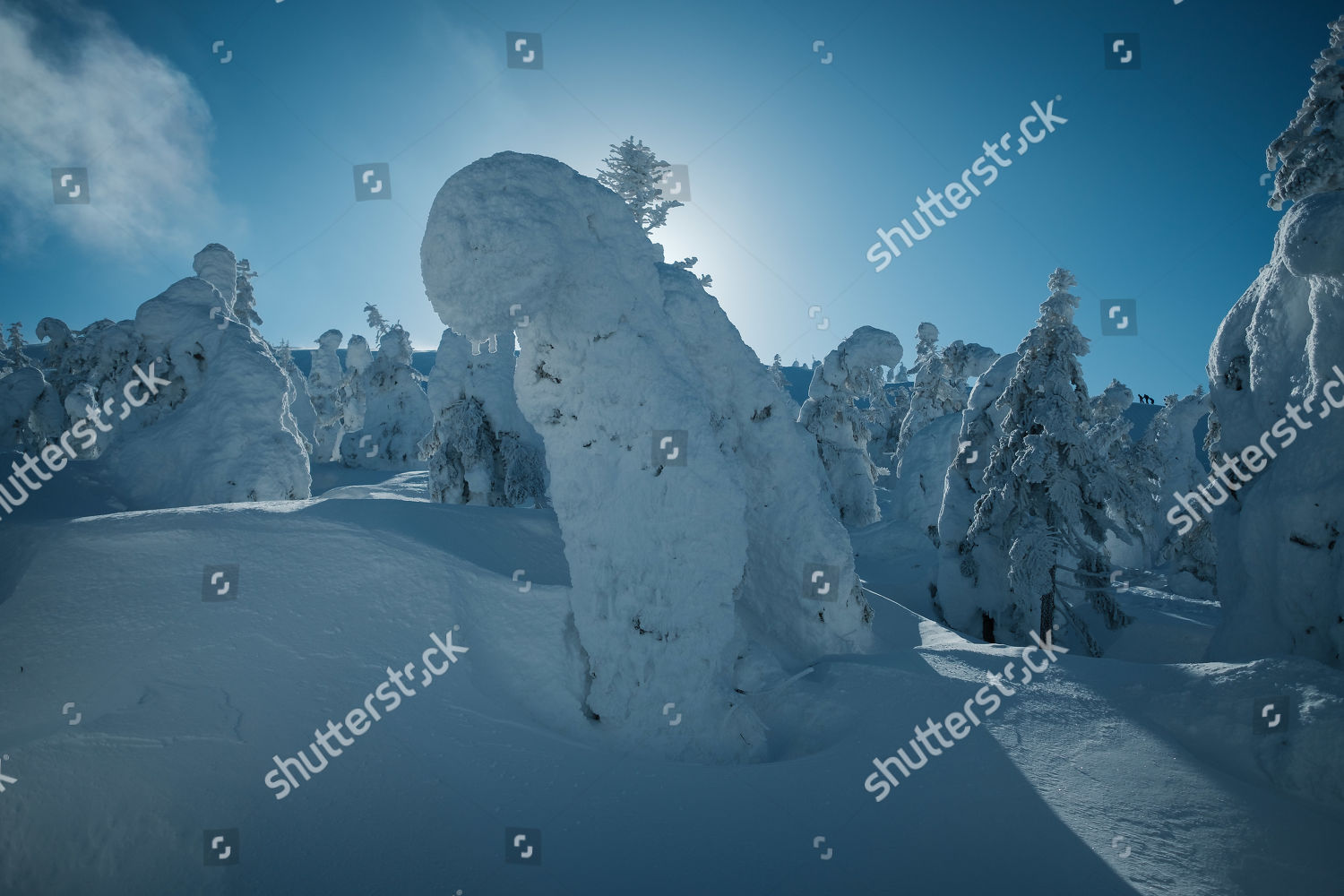 Picture shows snow monster trees area Cause Editorial Stock