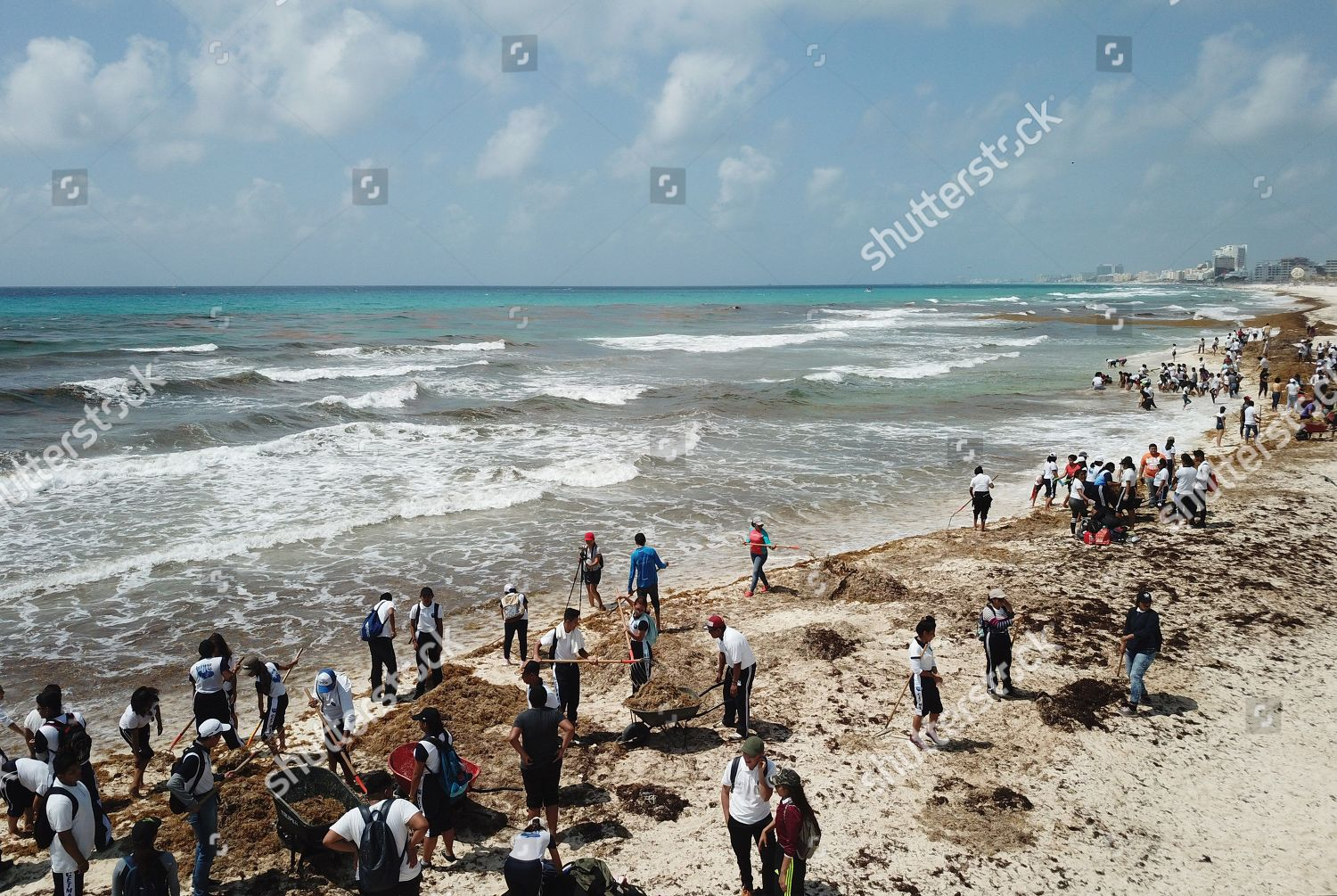 Dozens people clean sargassum seaweed after large Editorial Stock