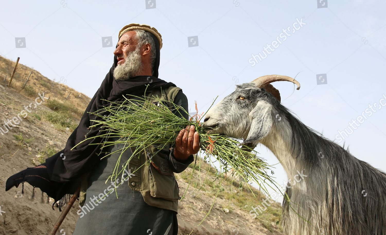 Afghan man feeds his goat he waits Editorial Stock Photo