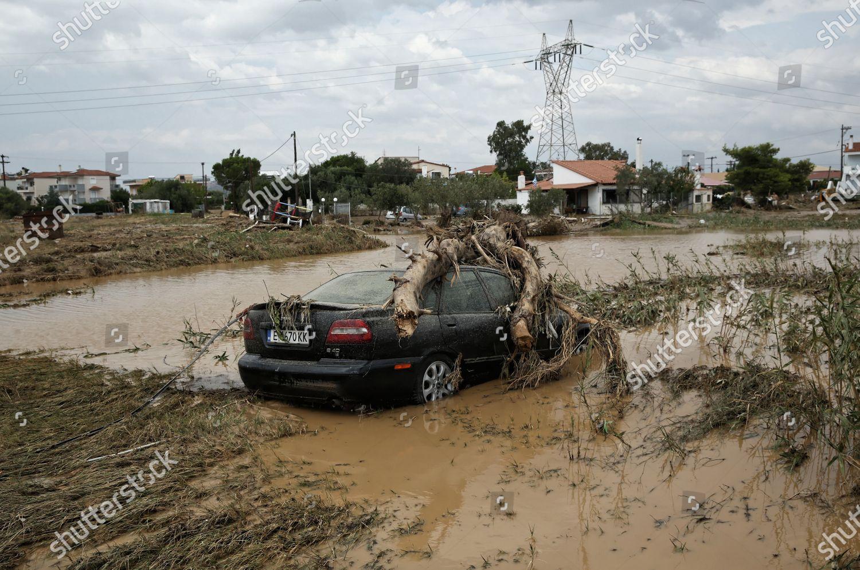 картинки наводнение правила тератомы редкие опухоли