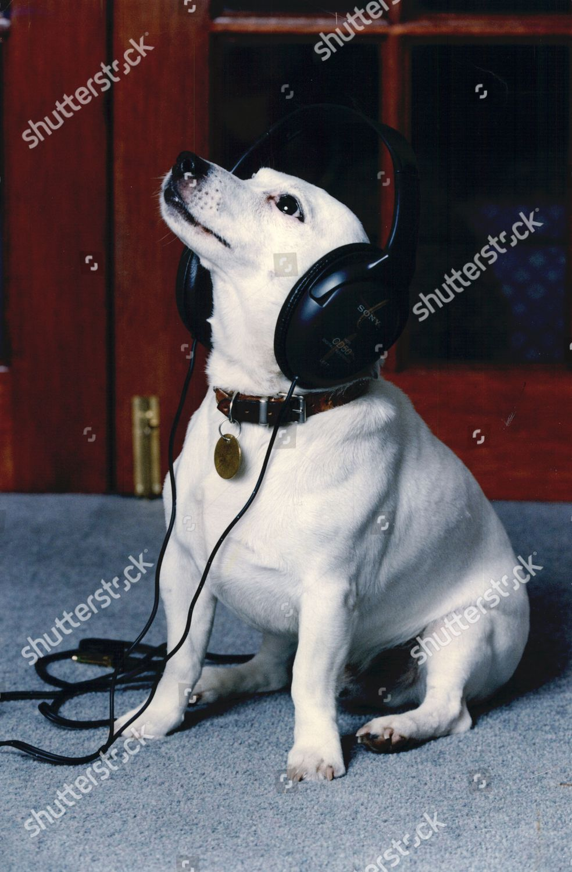 Nipper Jack Russell Dog Mascot Hmv Record Editorial Stock Photo