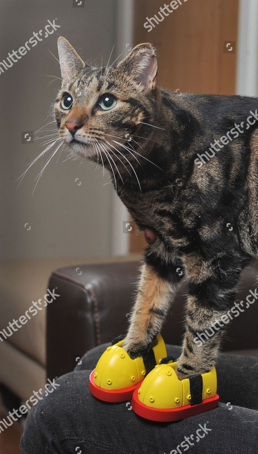 Jackie Cables Cat Mischief Wearing Pair Kitten Editorial Stock Photo Stock Image Shutterstock