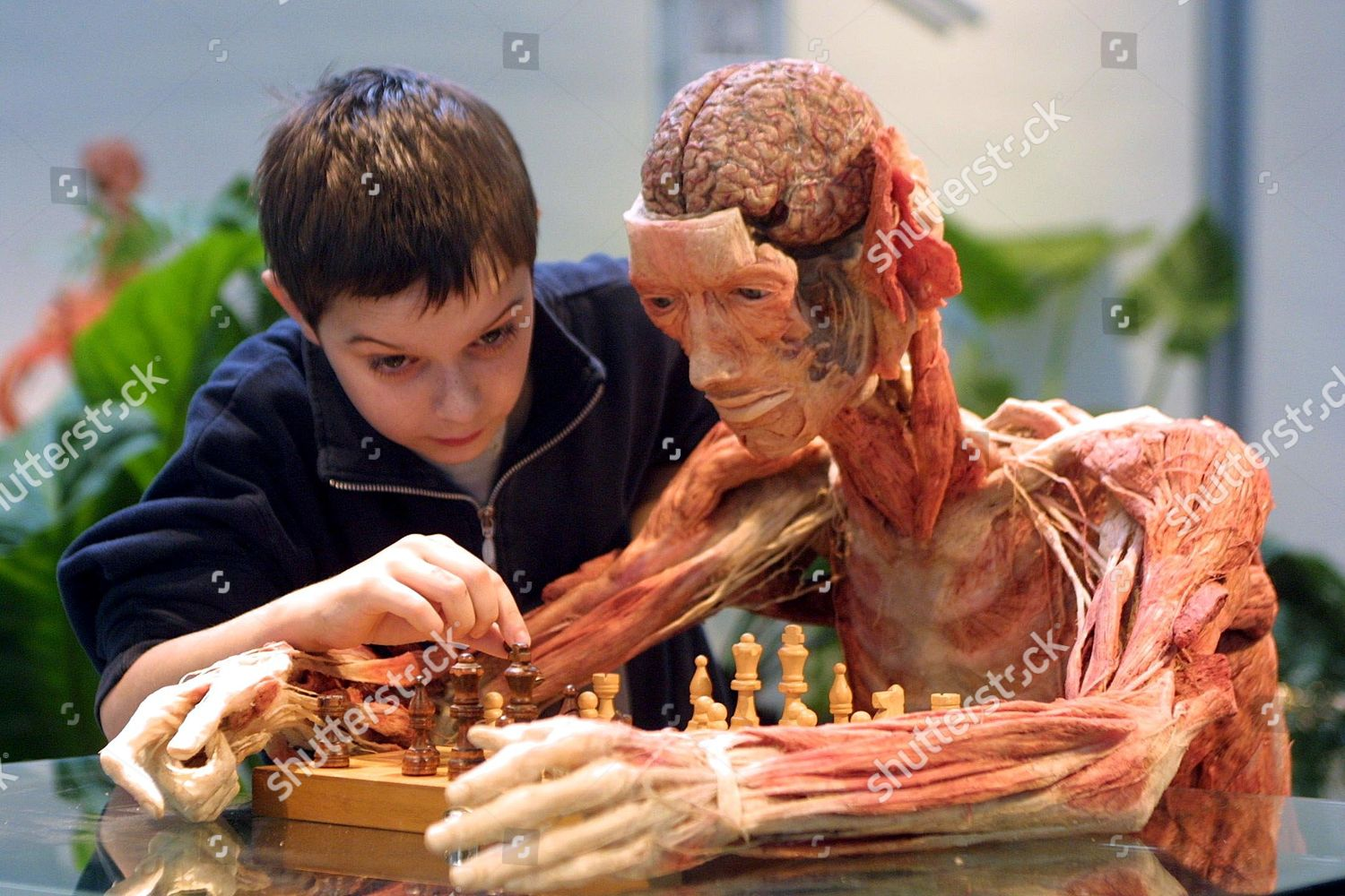 BOY PLAYING GAME CHESS REAL HUMAN BODY Editorial Stock Photo - Stock