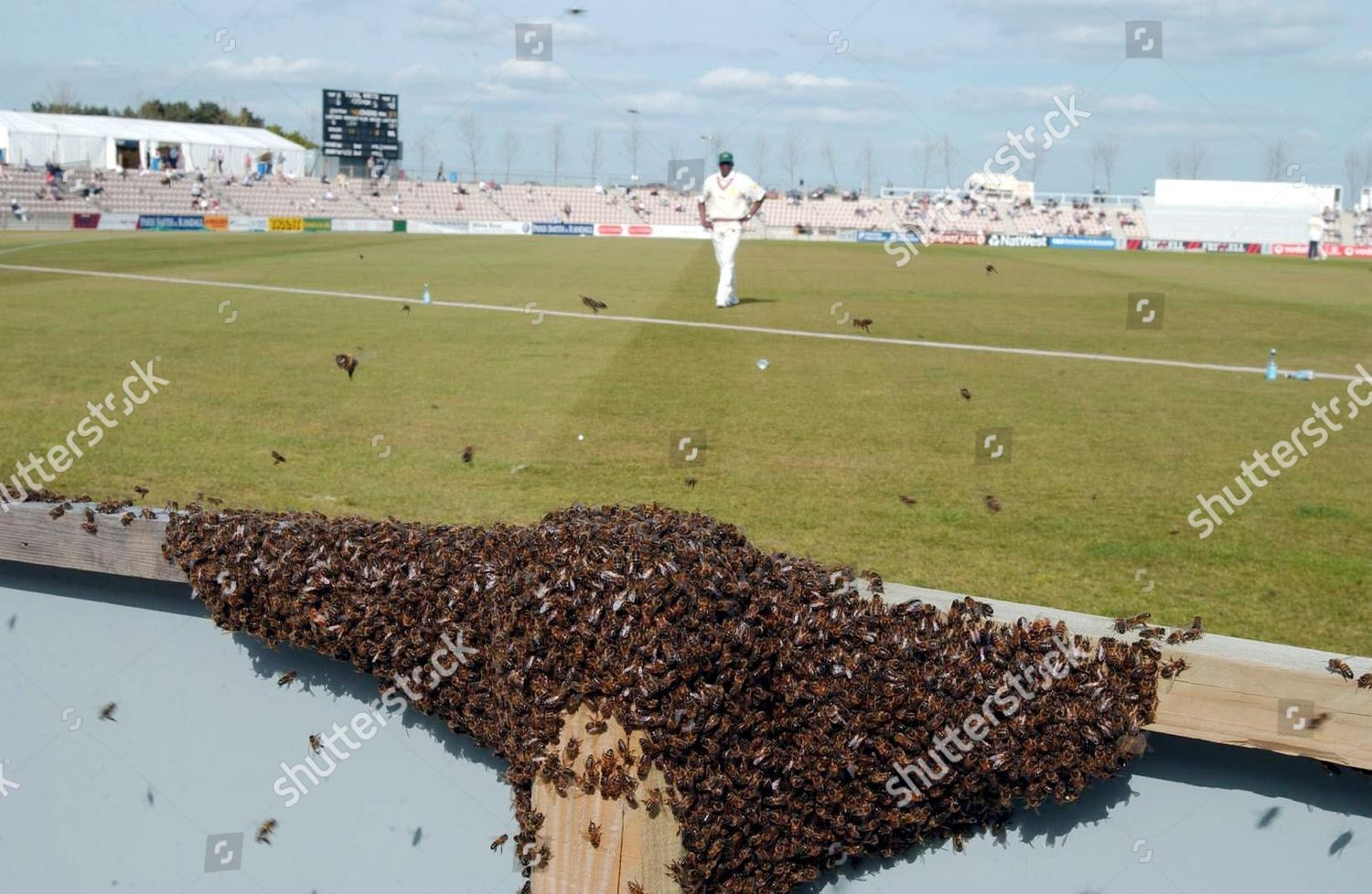 Bees Invade Rose Bowl Home Hampshire Cricket Editorial Stock