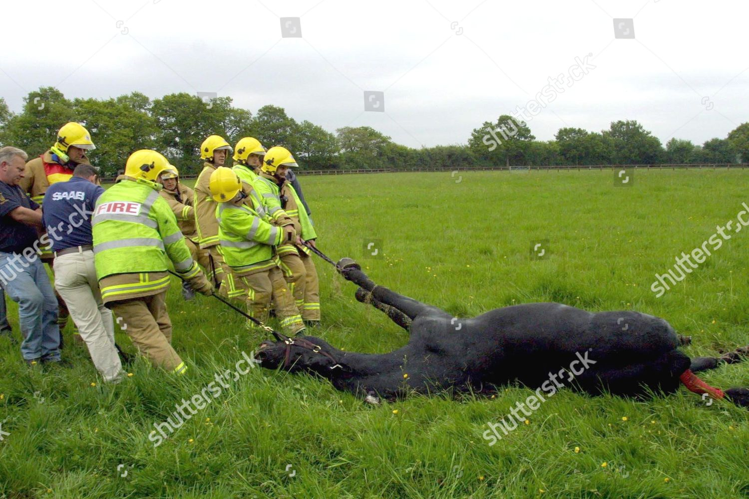 Accident In Surrey Today >> Accident Involving Horse Box Containing Two Horses Editorial