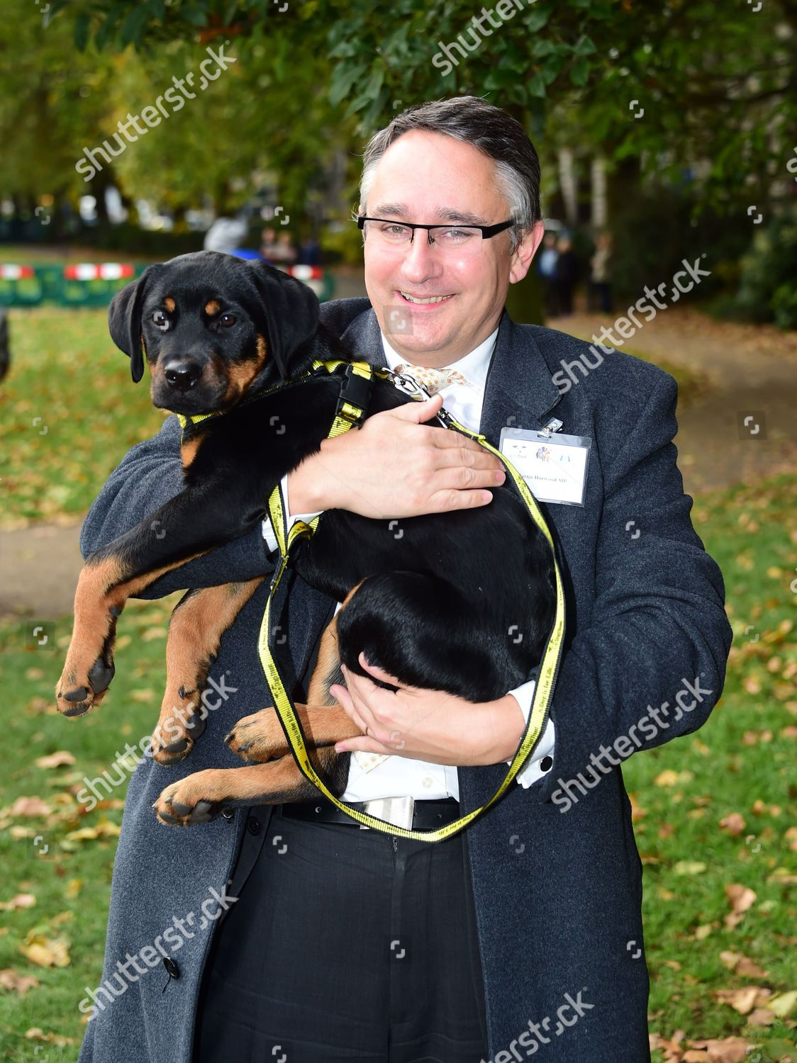 Martin Horwood Rottweiler rescue puppy Editorial Stock Photo - Stock