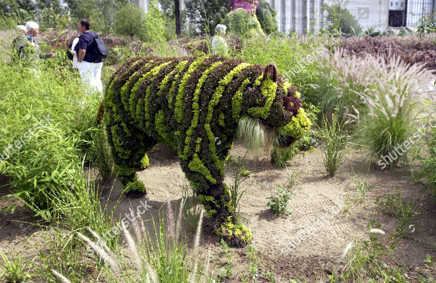 Tiger Topiary Sculpture Editorial Stock Photo Stock Image Shutterstock