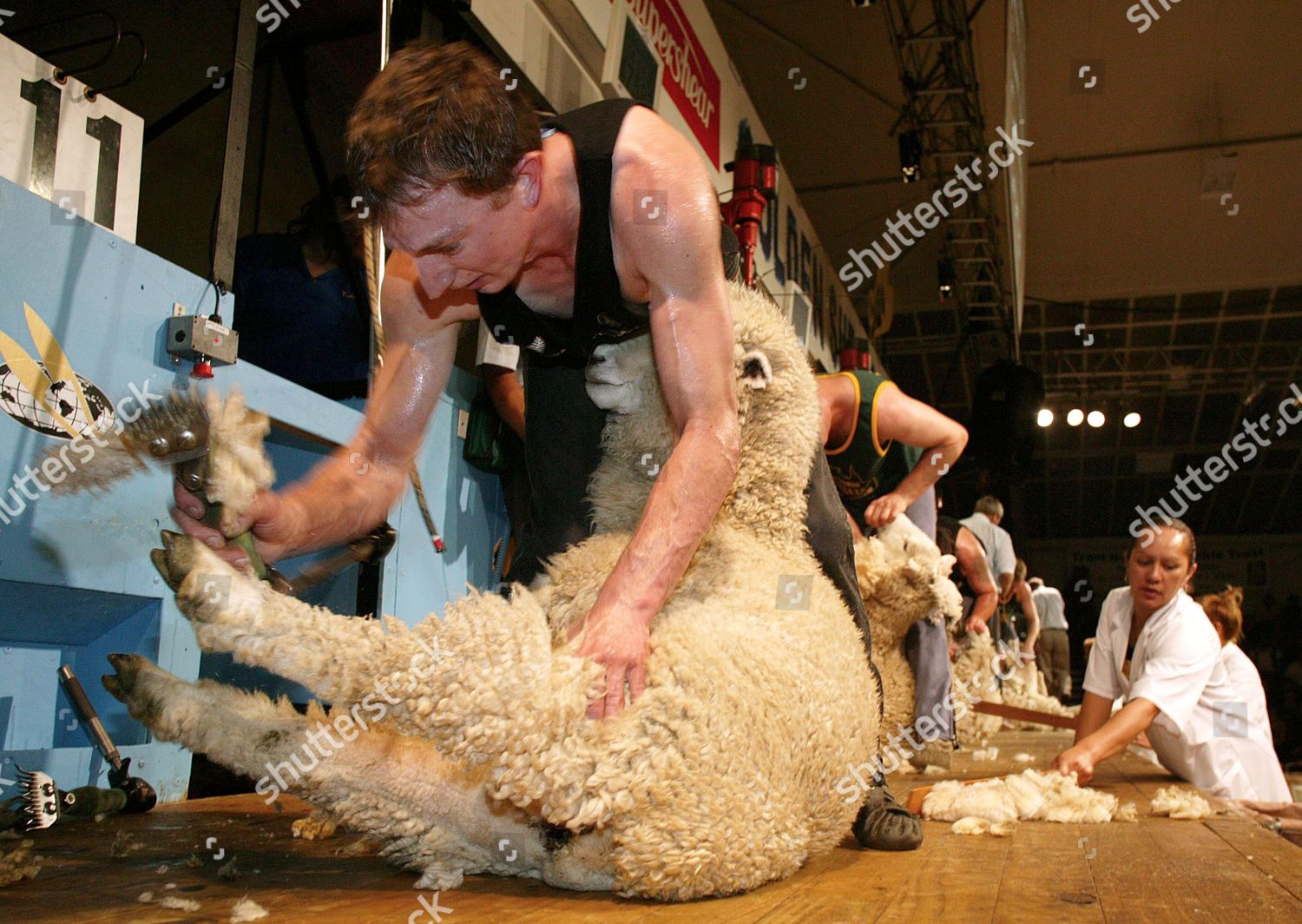 Golden Shears International Sheep Shearing Championships
