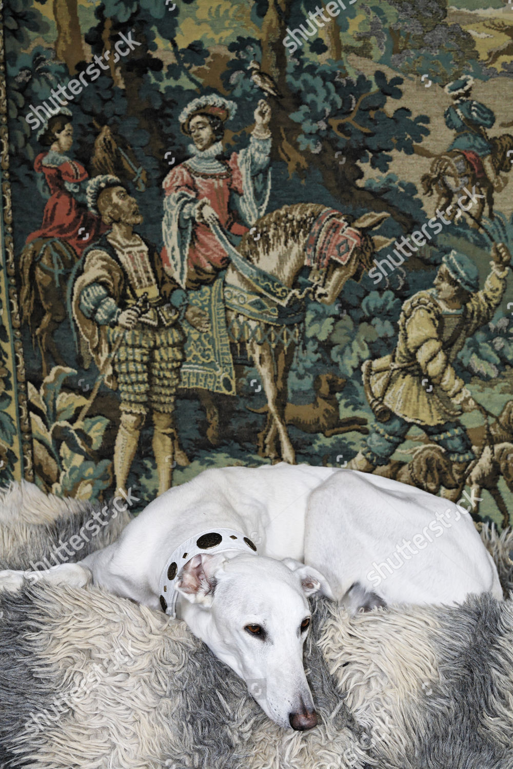 Greyhound Lying Front Tapestry Showing Medieval Hunting Editorial Stock Photo Stock Image Shutterstock