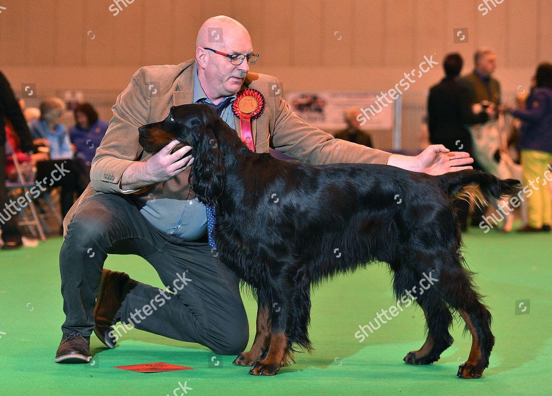 Crufts Dog Show Day 1 Gun Dog Editorial Stock Photo - Stock Image