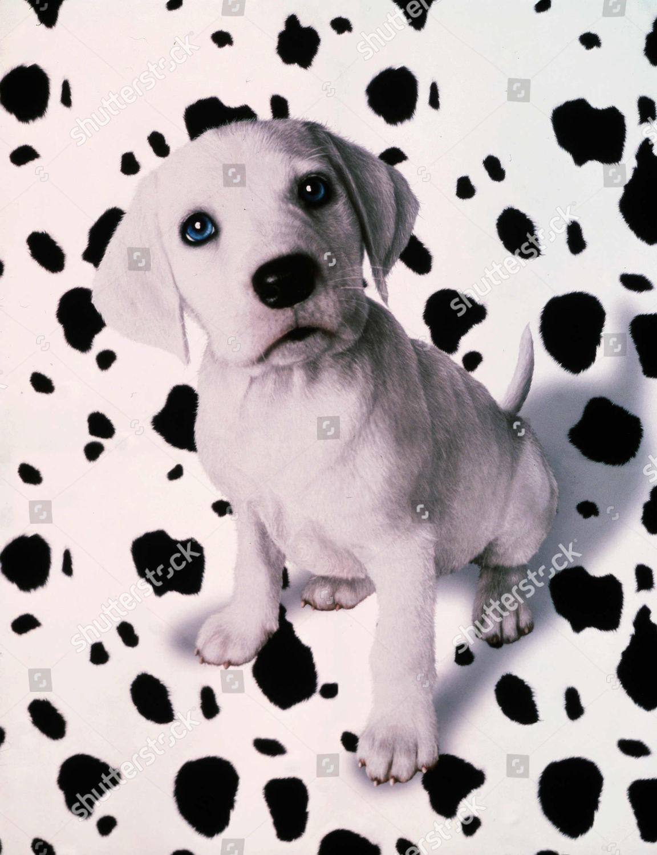 102 Dalmatians 2000 Editorial Stock Photo Stock Image Shutterstock