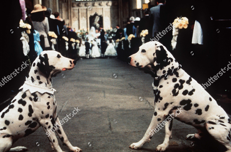 101 Dalmatians 1996 Editorial Stock Photo Stock Image Shutterstock