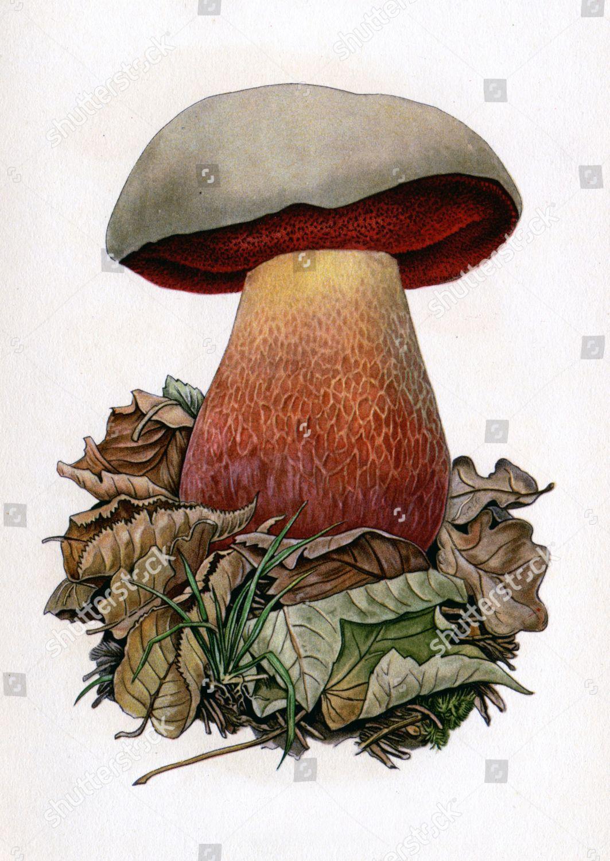 Devil and mushroom pack