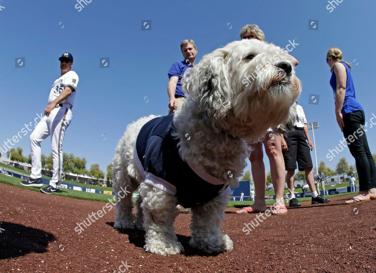milwaukee brewers unofficial mascot hank before exhibition