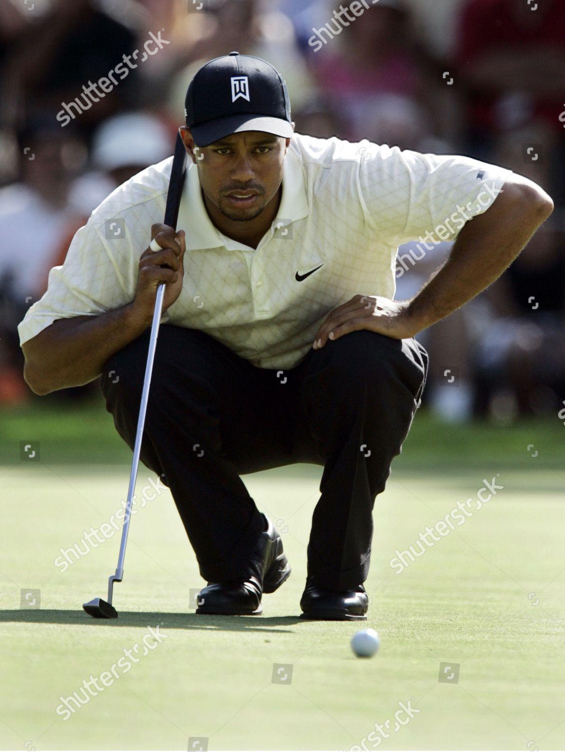 1f0439dbc Tiger Woods Tiger Woods lines his putt Editorial Stock Photo - Stock ...