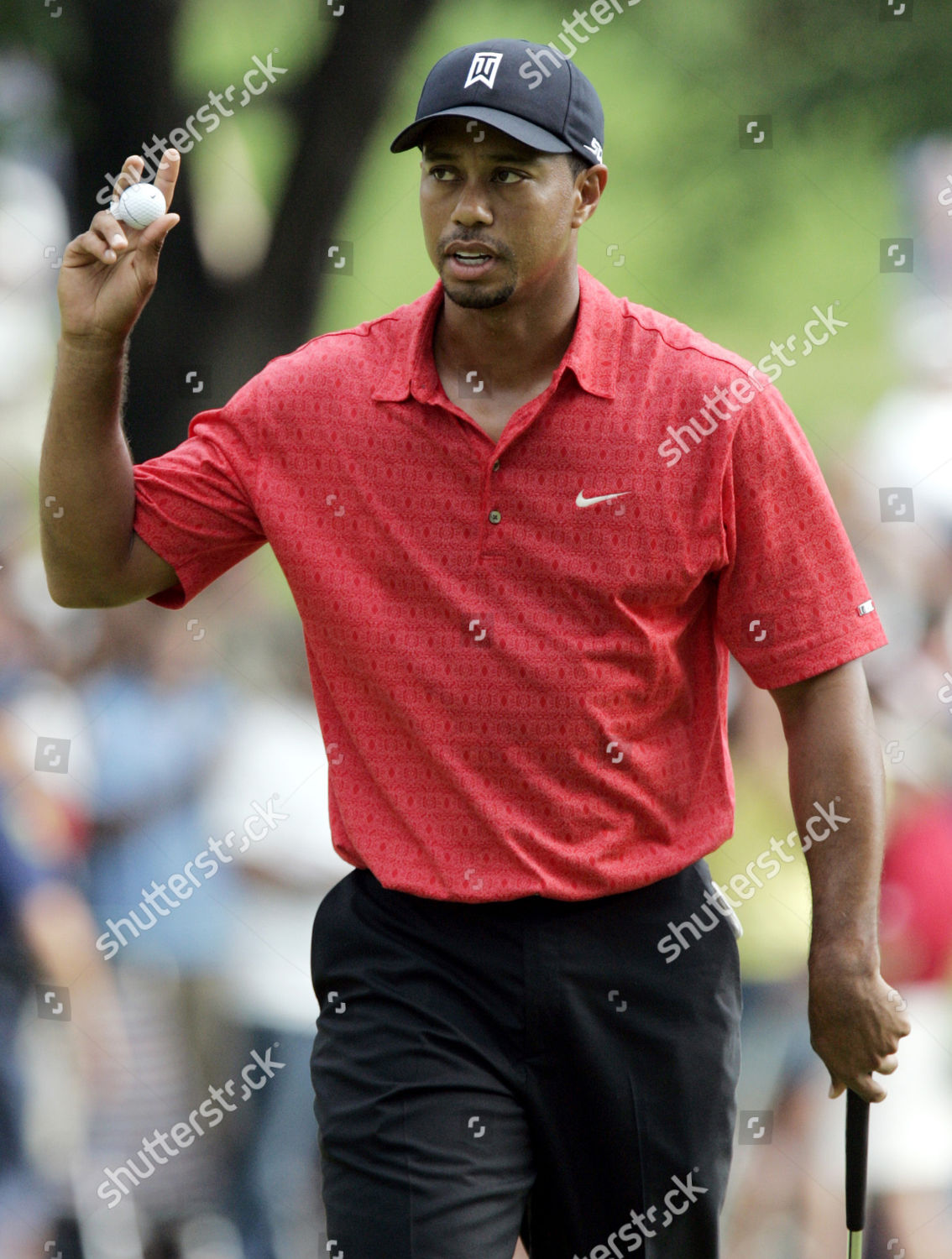 435044725 Tiger Woods Tiger Woods acknowledges gallery on Editorial Stock ...