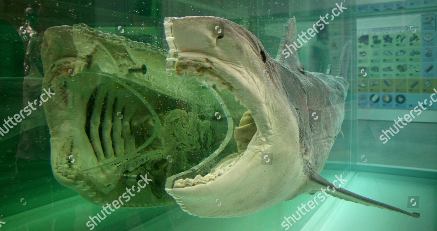 Damien Hirsts Death Explained Sculpture Editorial Stock Photo Stock Image Shutterstock