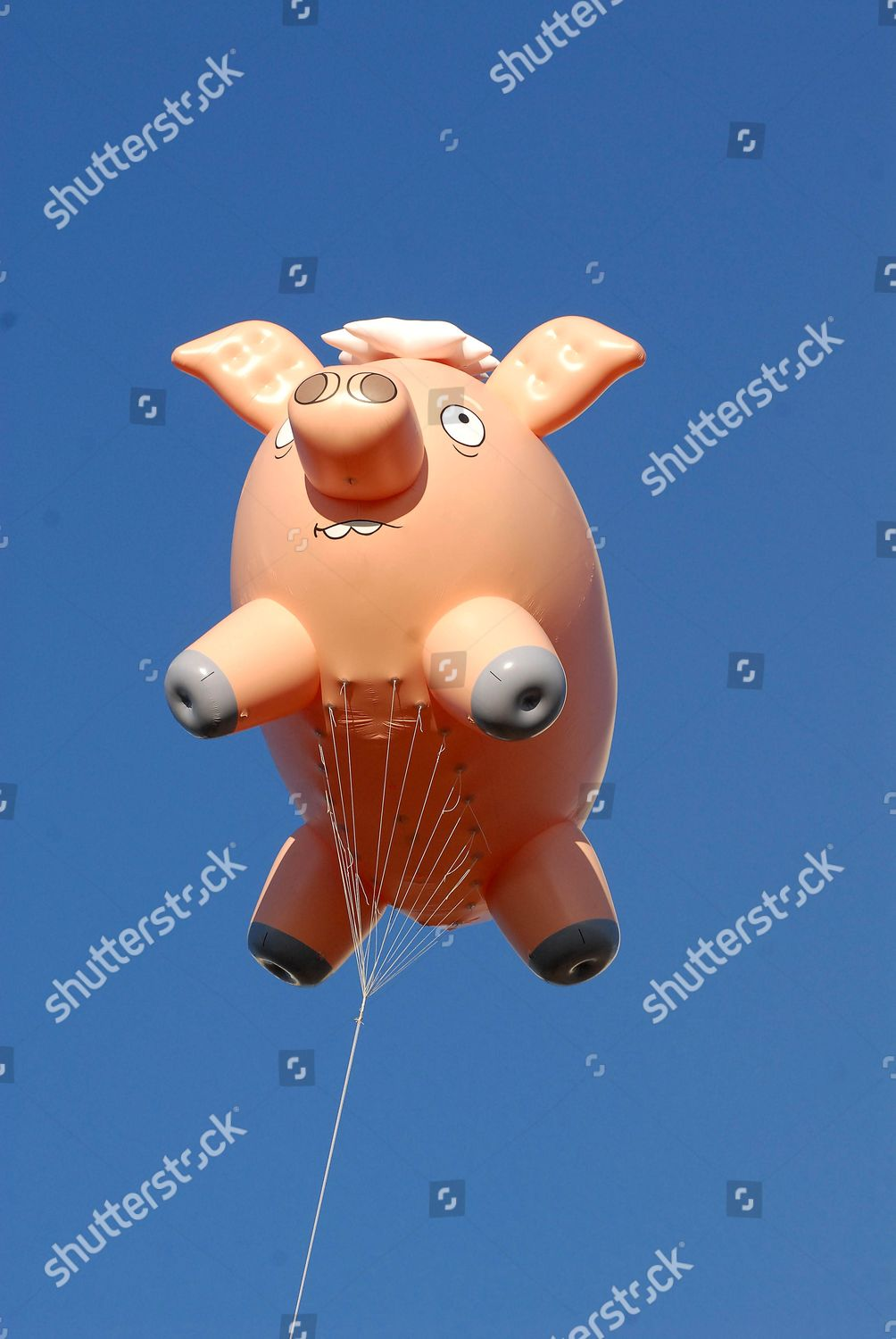 Giant Spider Pig Flies Editorial Stock Photo Stock Image Shutterstock