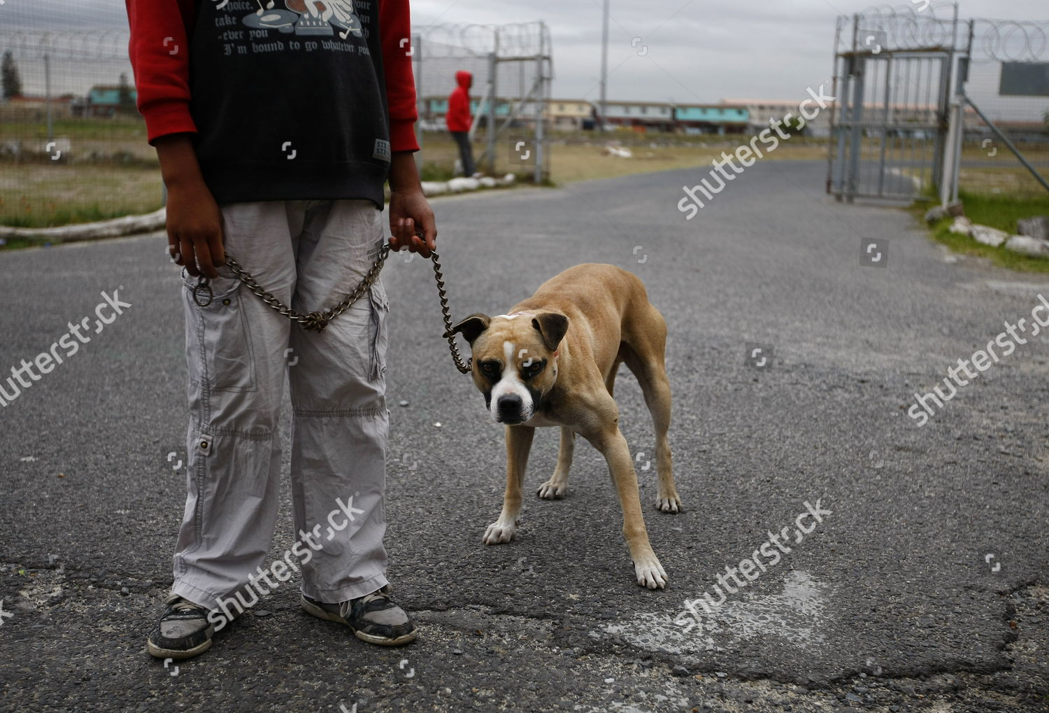 South African Boy Holds His Dog Using Editorial Stock Photo - Stock