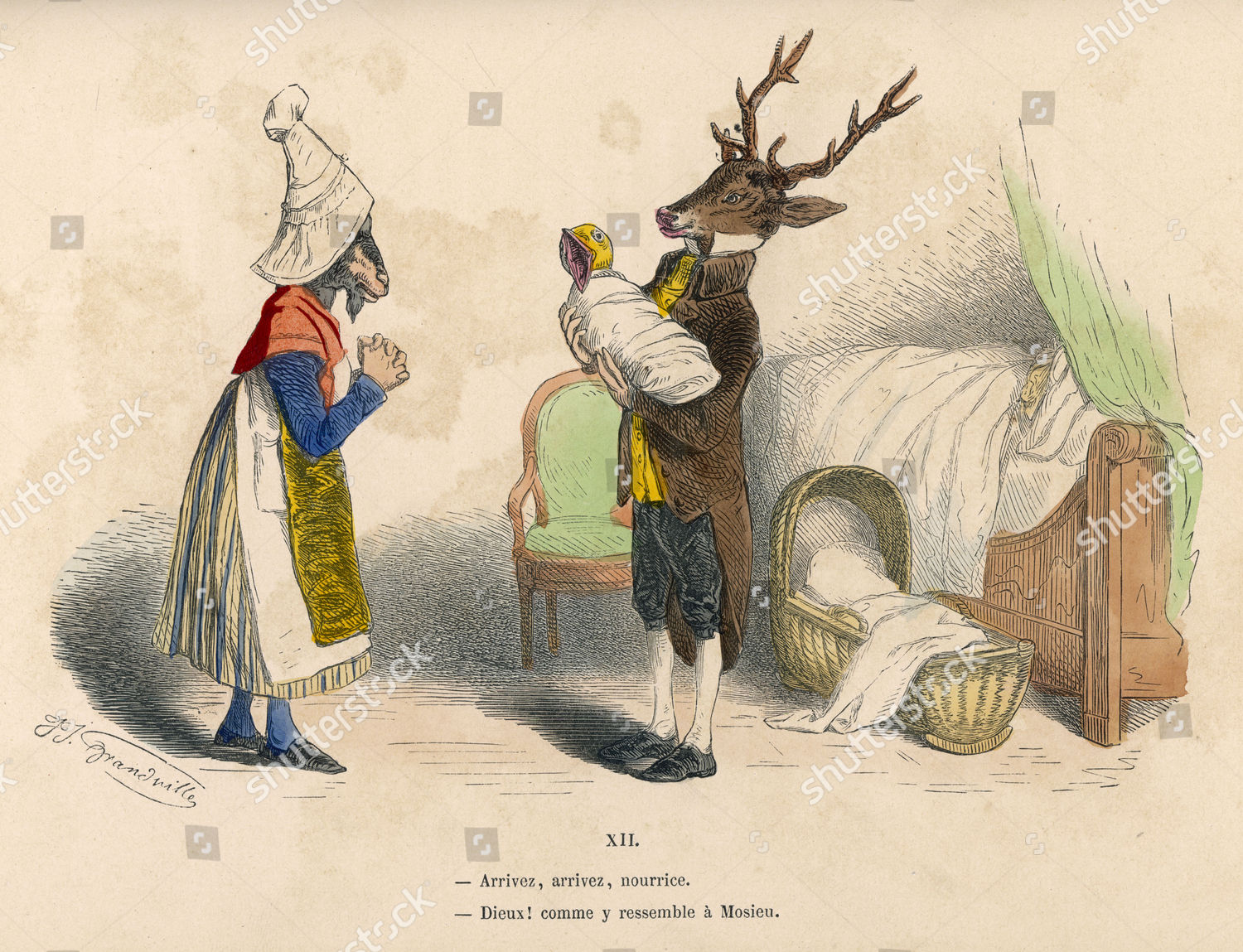 stag shows successfully delivered bird midwife 1828 editorial stock
