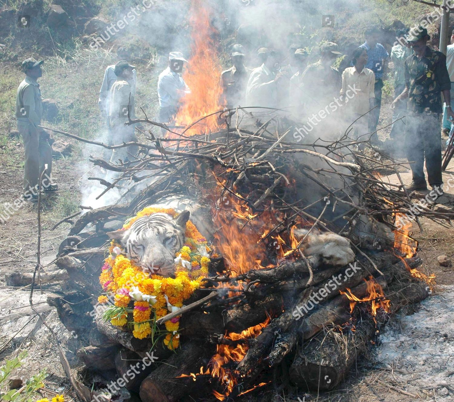 Indian Forest Officials Stand Behind Funeral Pyre Editorial