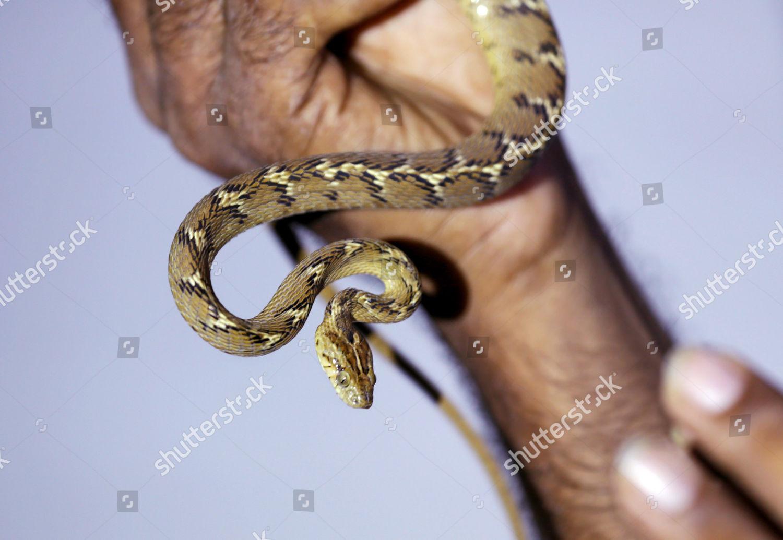 Indian Snake Handler Tushar Kanti Dhali Shows Editorial