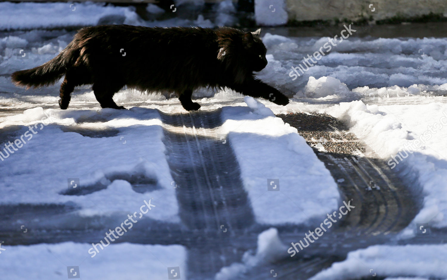 Cat Walks Past On Snowcovered Street Santiago Editorial Stock Photo Stock Image Shutterstock