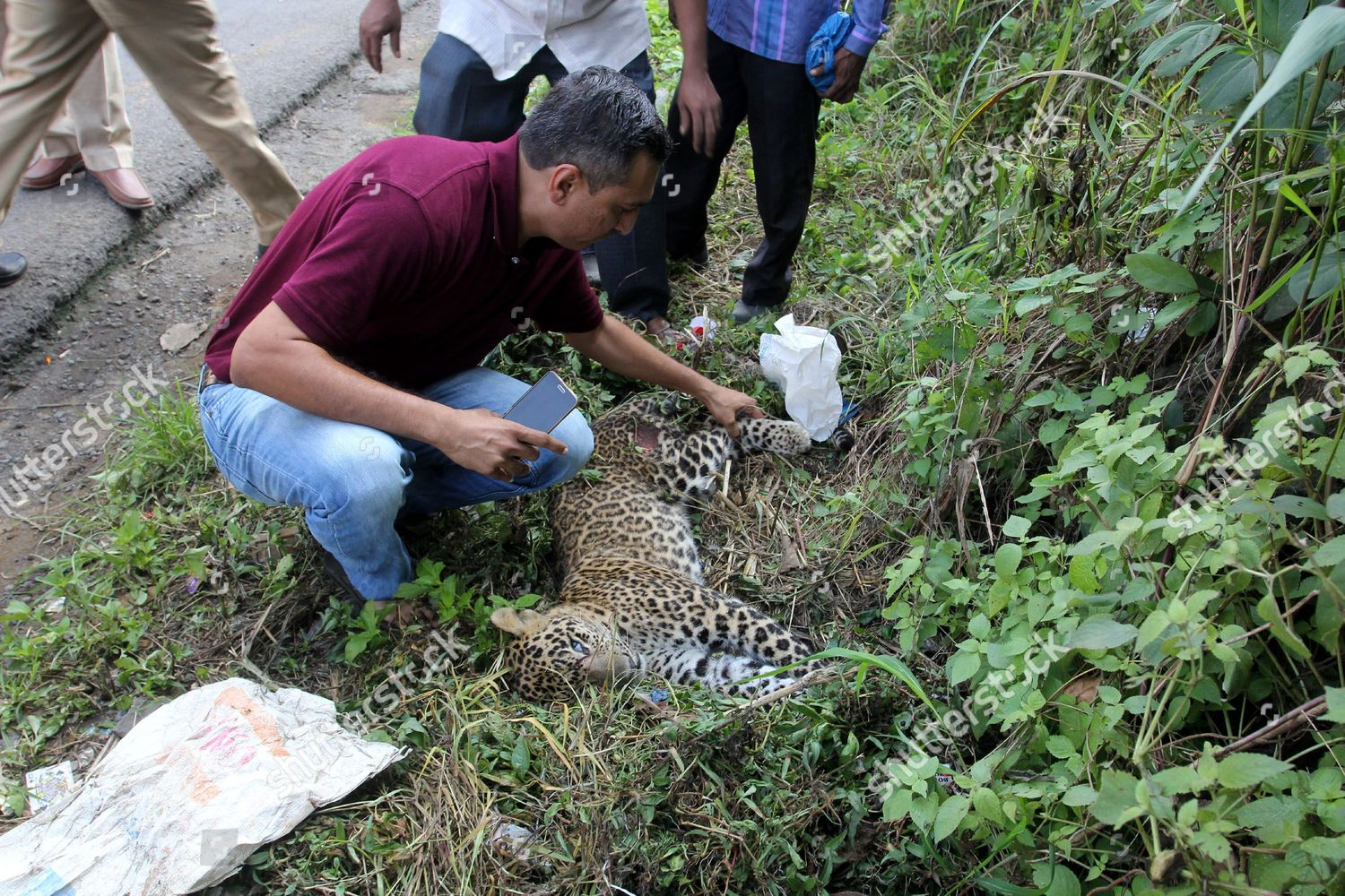 Forest officials check on spot Leopard found Editorial Stock