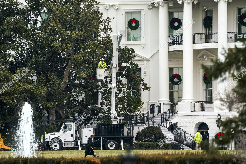 Workers Prepare Remove Iconic Jackson Magnolia Tree Editorial Stock