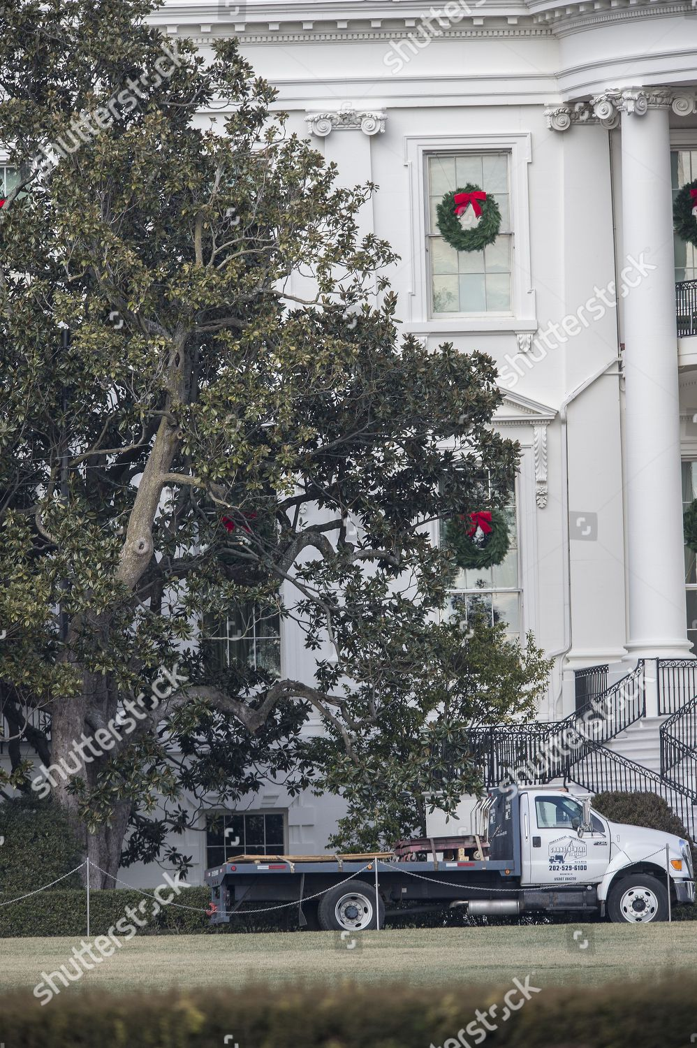 Oldest White House Tree Planted By Us Editorial Stock Photo Stock