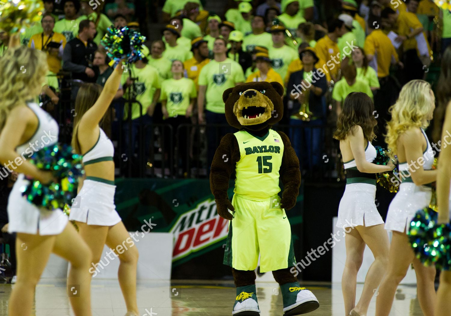 Baylor Bears Mascot Wit Cheerleaders Before Ncaa Editorial Stock