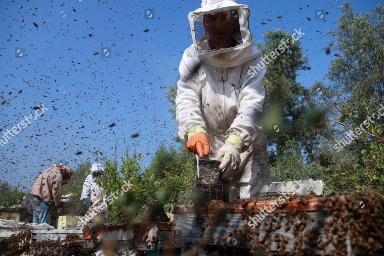 Palestinian beekeepers collect honey honey bee farm