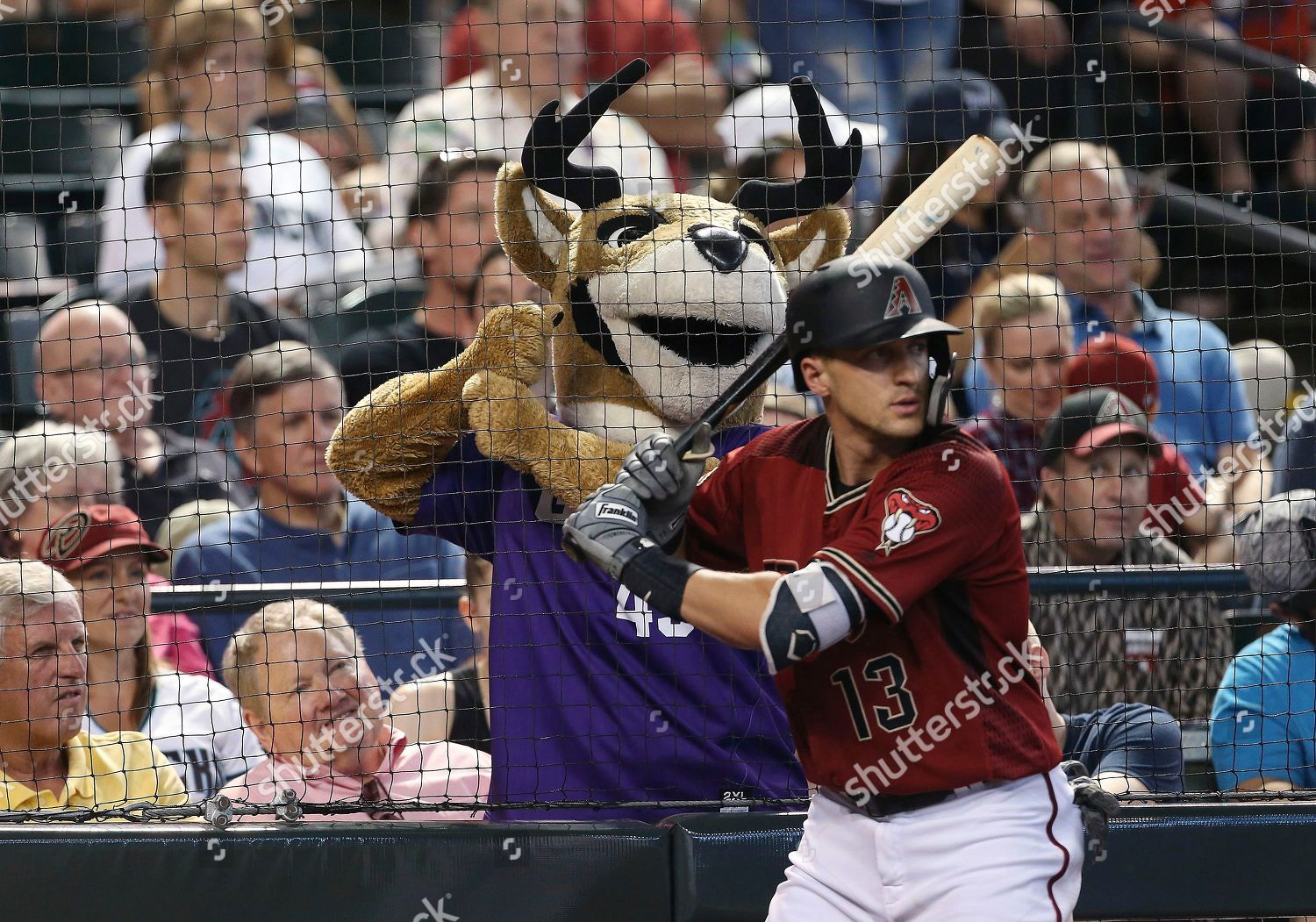 Grand Canyon University Mascot Thunder Mimics Arizona