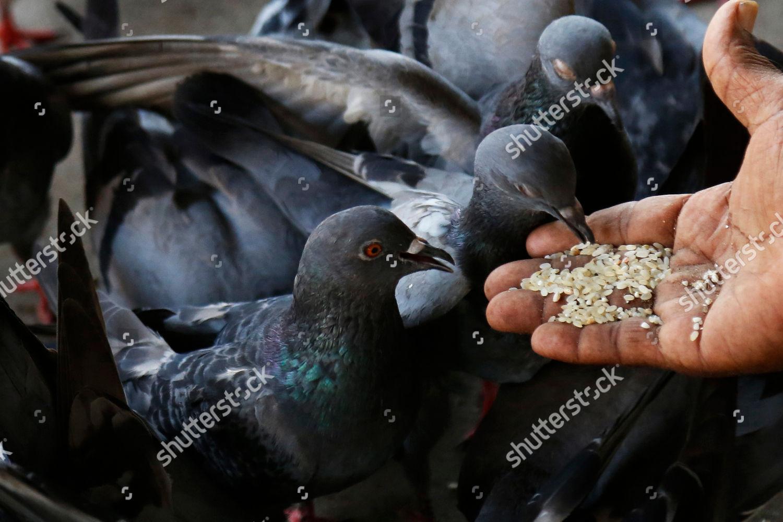Elderly Sri Lankan Man Feeds Pigeons Deserted Editorial