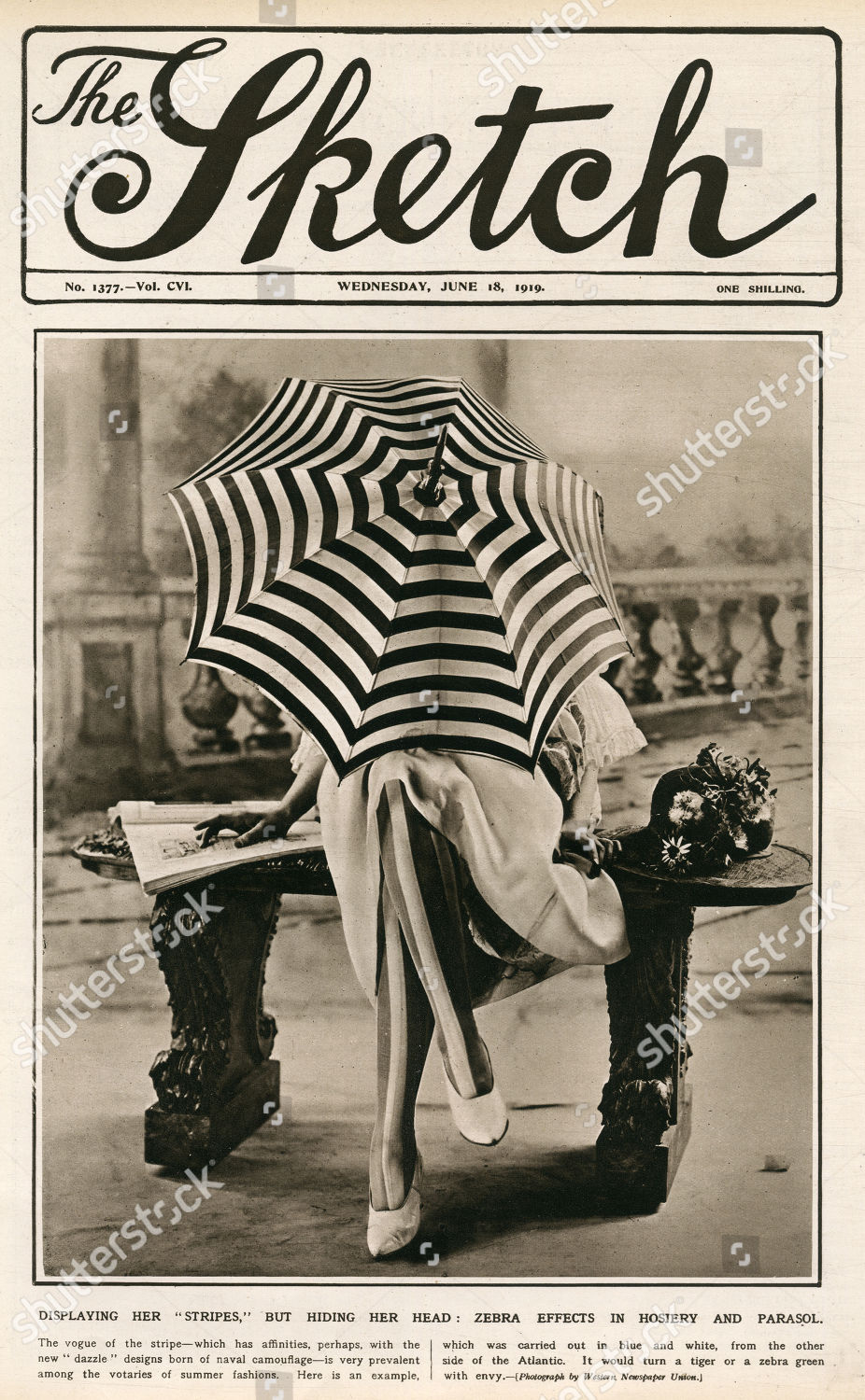 Zebra Effects Hosiery Parasol Front Cover Sketch Editorial Stock Photo Stock Image Shutterstock