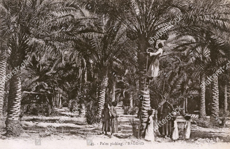 Dating Bagdad riteish Deshmukh dating Genelia d Souza