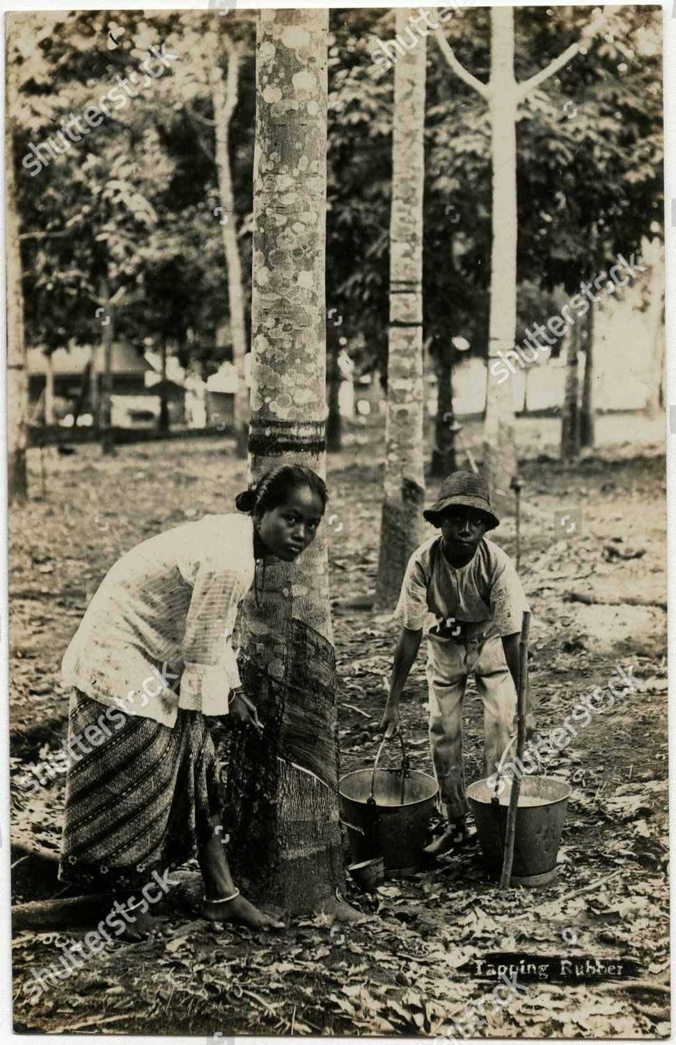 Stock photo of Malaysia - Tapping Rubber Trees