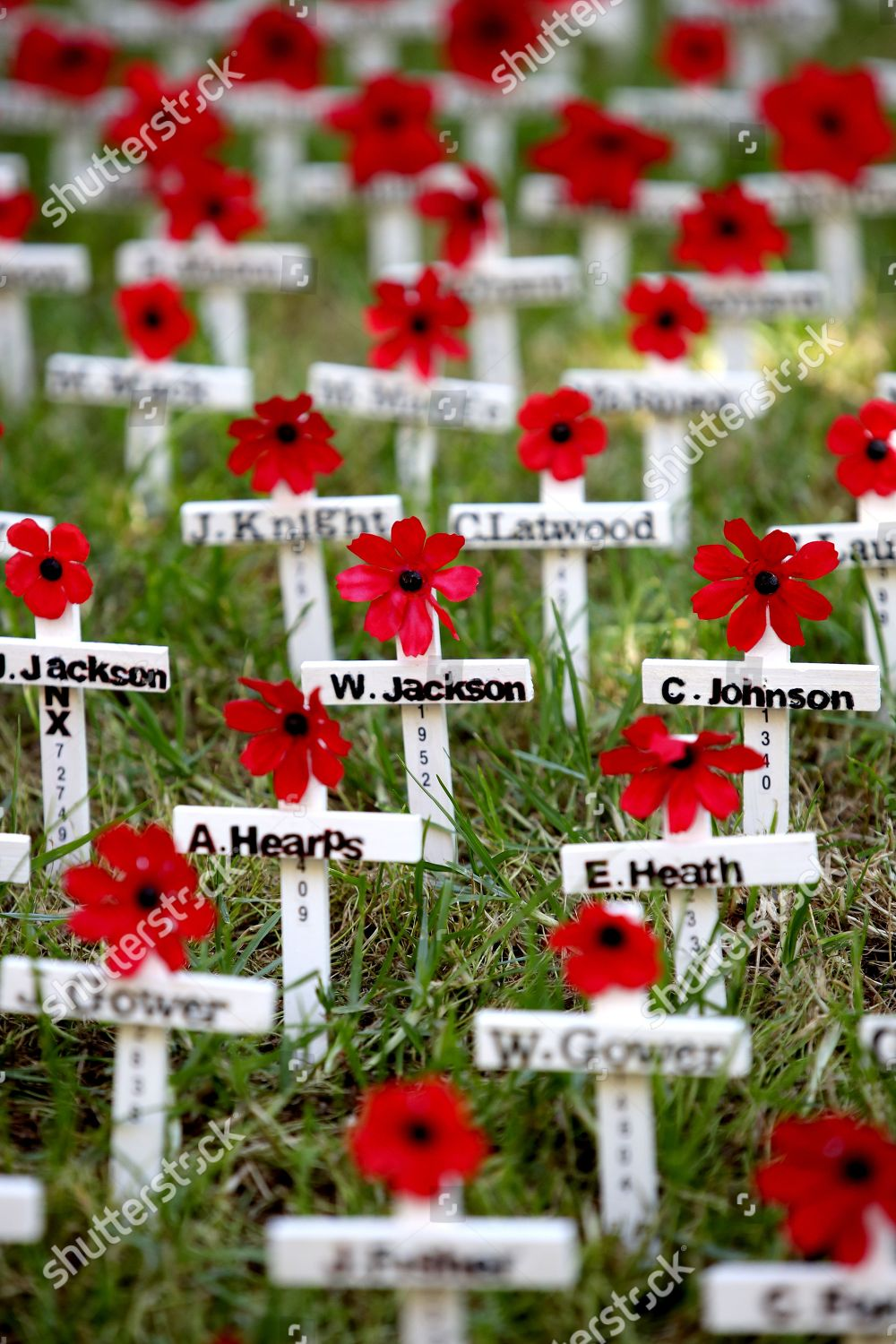 Poppies Crosses Names Fallen On Display During Stock Photo