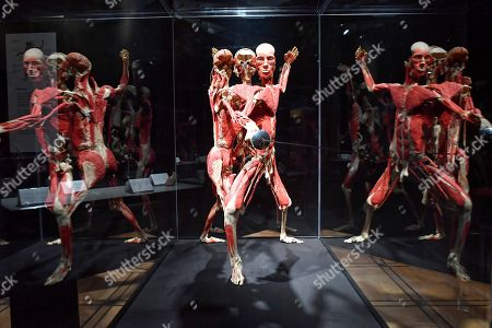 The plastinated human body 'swordsman' is on display in the exhibition 'Body Worlds and The Cycle of Life' in Warsaw, Poland, 01 December 2018. The show features human bodies preserved by the plastination technique, invented by German anatomist Gunther von Hagens.