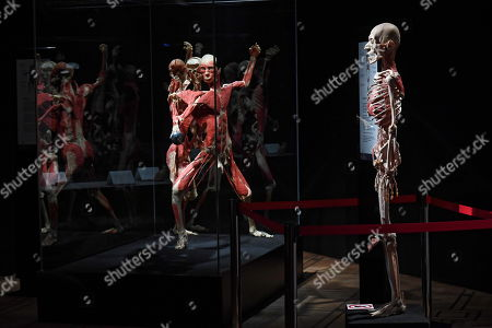 Editorial photo of Body Worlds exhibit opens in Warsaw, Poland - 01 Dec 2018