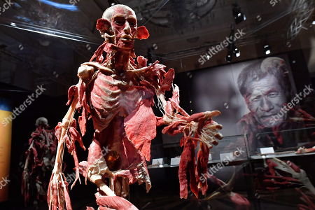 Editorial picture of Body Worlds exhibit opens in Warsaw, Poland - 01 Dec 2018