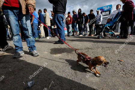 ea7ecaec0825 A chihuahua named Teca barks as his owner, Honduran migrant Nelson Pacheco,  holds him