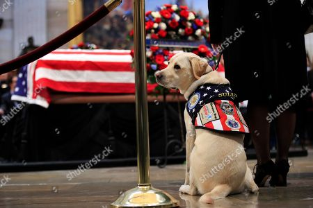 """Sully, former President George H.W. Bush's service dog, pays his respect to President Bush as he lie in state at the U.S. Capitol in Washington, . Sully, named for retired airline pilot Chesley """"Sully"""" Sullenberger III, who became famous for landing a damaged passenger jet on the Hudson River in 2009, is headed back to America's VetDogs in Smithtown, N.Y., where he was born and trained. Then, according to John Miller, the president and CEO of America's VetDogs, Sully will go for training at Walter Reed to help brace, retrieve and otherwise help the veterans getting care there"""
