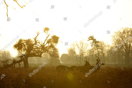 Young stags are silhouetted by the sun on a cold morning in Bushy Park, south west London