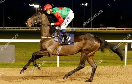 Horse Racing 07 Jan 2019 Stock Photos (Exclusive)   Shutterstock